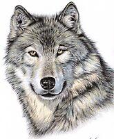 The Wolf by Nicole Zeug