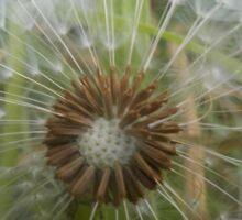 Dandelion Seed Head, Ripe for Blowing Sticker