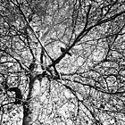Spot the bird by Rebekah Palmer