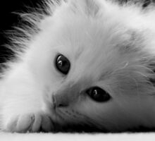 Adorable White Kitten Sticker