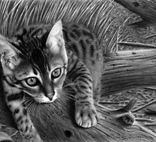 """Talek"" cat drawing by Matt Deakin"