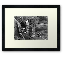 """Talek"" cat drawing Framed Print"