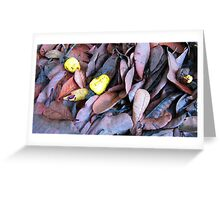 cashew nuts on dried leaves Greeting Card