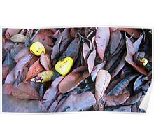 cashew nuts on dried leaves Poster