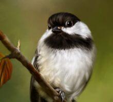 Autumn Chickadee Painting Sticker