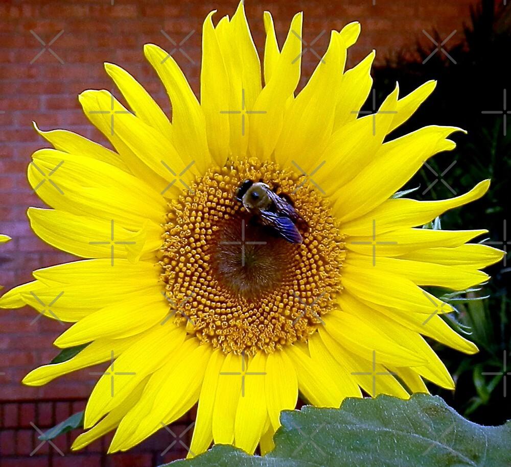 Magi's Sunflower by Scott Mitchell