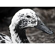 speckled Photographic Print