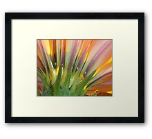 Looking Up, Take Two Framed Print
