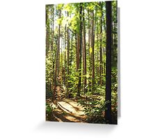 Summer Trails Greeting Card