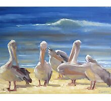 Grooming time - pelicans in the sun Photographic Print