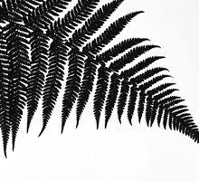 Silver Fern by mattslinn
