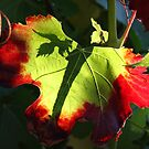Grape Leaves of Fall by CherylBee