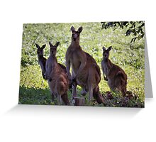 Kangaroos, South West Australia Greeting Card