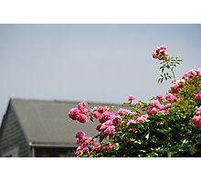 Nantucket Flowers Photographic Print