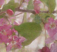 Pretty Pink Blossoms Sticker