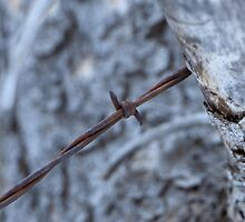 Old Barbed Wire Fence - Colorado by Joel Michael