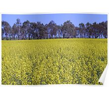 Canola Fields, South of Perth Poster