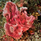 Paddleflap Scorpionfish by MattTworkowski
