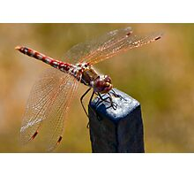 The Red Dragon Photographic Print