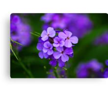 A simple purple flower Canvas Print