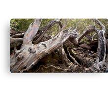 Tree Wreck  Canvas Print
