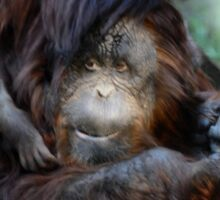 Orangutan Mom and Baby  Sticker
