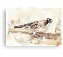 White-browed Sparrow Weaver (Koringvoël) Canvas Print