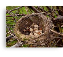 Abandoned Nest Canvas Print