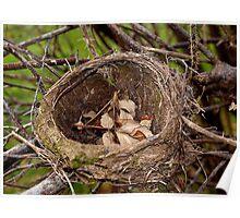 Abandoned Nest Poster