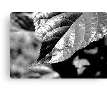 Leaf Contrast Canvas Print