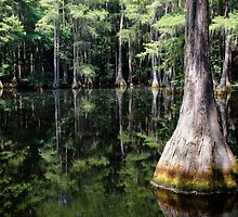 Florida Beauty 4 by andreaanderegg
