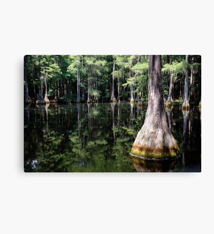 Florida Beauty 4 Canvas Print