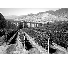 Timeless Wine Making Photographic Print