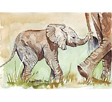 Baby Elephant walk Photographic Print