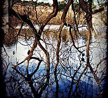 Pukeko in tree by Jodi Fleming