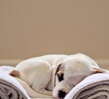 Portrait of a sleeping puppy Sticker