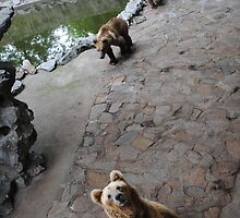 Bears by Christopher Colletta
