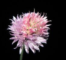 Chive flower at night (2) Sticker