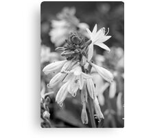 Flowers In Drops Canvas Print