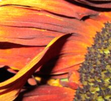 Sunflower at night Sticker