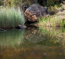 Glenbrook Creek by Malcolm Katon
