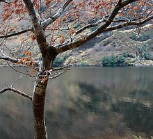 Lakeside tree by Phil  Crean