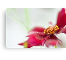 Red flower foreground Canvas Print