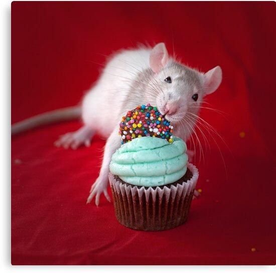 Happy Birthday by Nicole Goggins