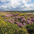 Landscapes of West Gwent by Jane Corey