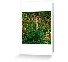 Lupins in the Pond Garden Greeting Card