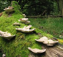 Fungi on mossy log by Jane Corey