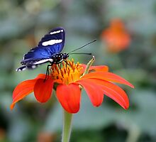 Butterfly & Flower by Jo Nijenhuis