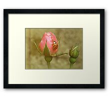 Open Up and let me in... Framed Print