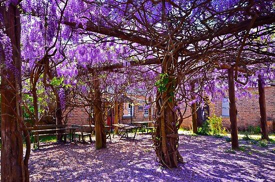 Colours of spring.. by Warren  Patten